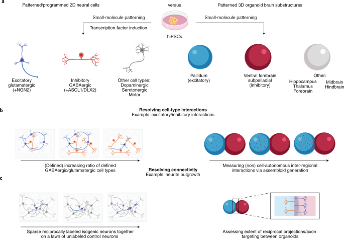Modeling the complex genetic architectures of brain disease