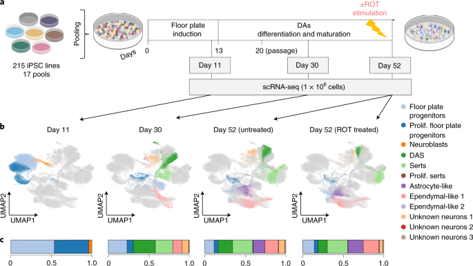 Population-scale single-cell RNA-seq profiling across dopaminergic neuron differentiation