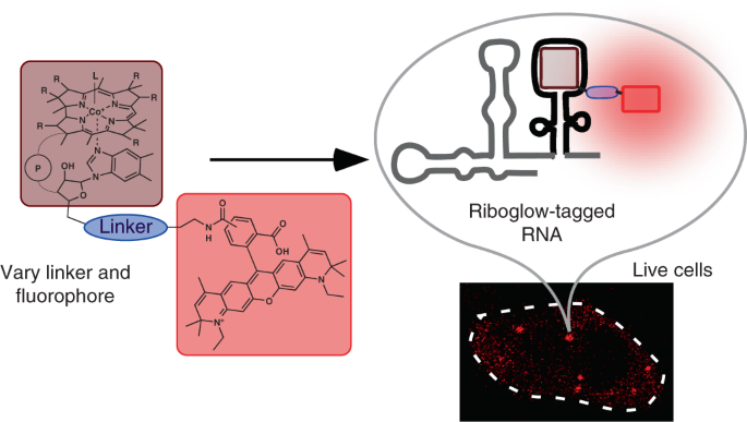 A multicolor riboswitch-based platform for imaging of RNA in live mammalian cells