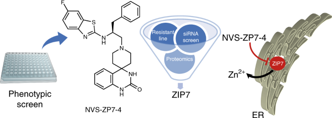 Discovery of a ZIP7 inhibitor from a Notch pathway screen - RapidAPI