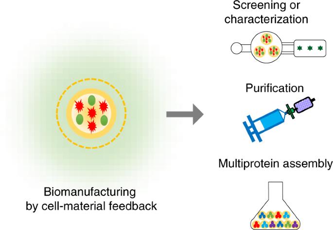 Versatile biomanufacturing through stimulus-responsive cell–material feedback