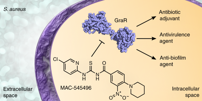 Discovery of an antivirulence compound that reverses β -lactam resistance in MRSA