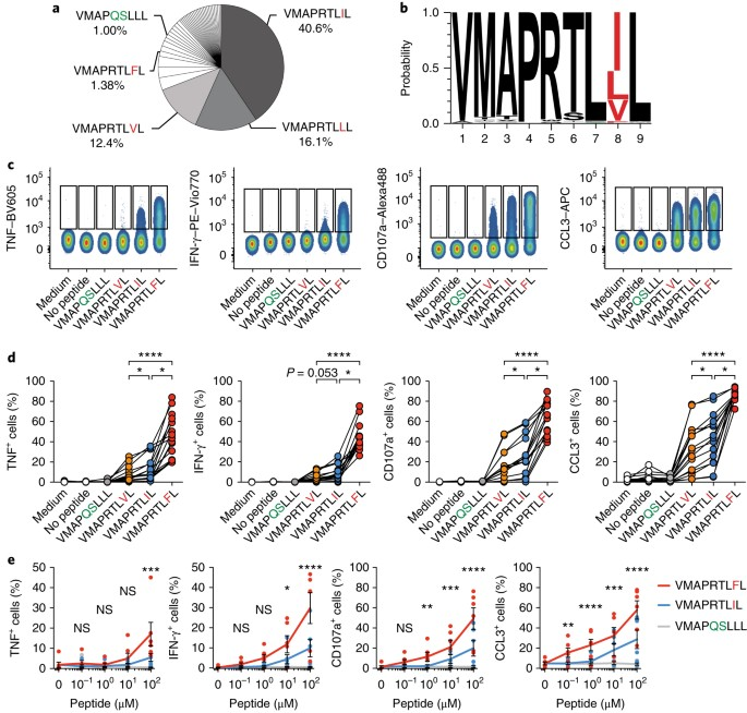 Peptide-specific recognition of human cytomegalovirus