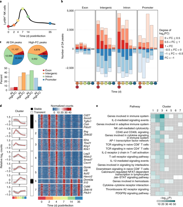 Epigenetic control of innate and adaptive immune memory