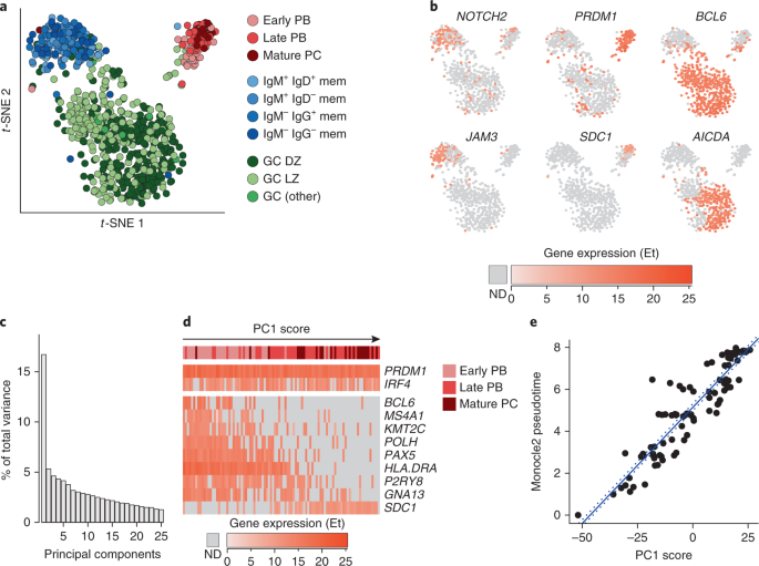 Human germinal center transcriptional programs are de-synchronized