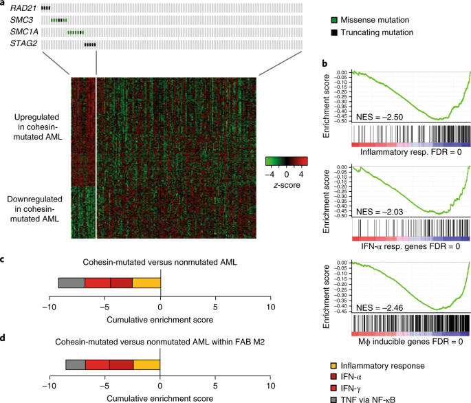 Control of inducible gene expression links cohesin to
