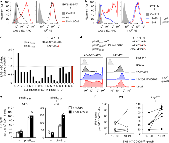 LAG-3 inhibits the activation of CD4 + T cells that recognize stable