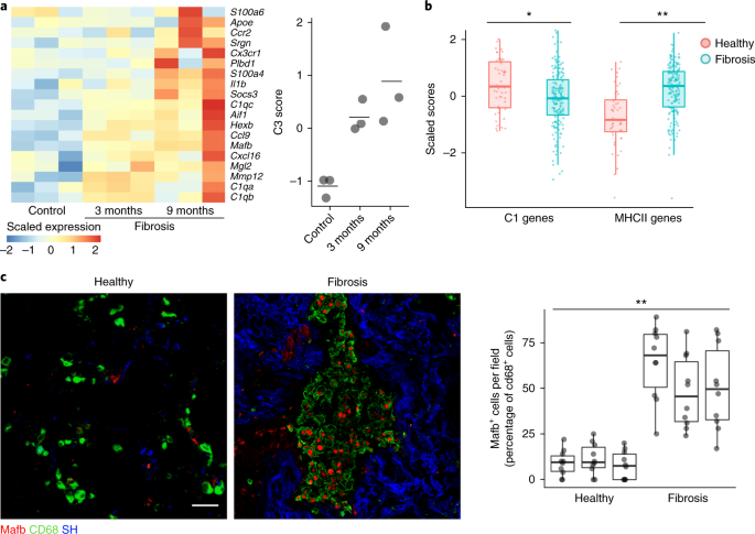 a heatmap of c3 genes from bleomycin induced fibrosis measured by microarray in an epithelial telomere dysfunction model of progressive lung fibrosis n