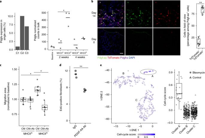 a pdgfa expression in lung scrna seq macrophage clusters and by bulk rna seq of siglecfcd11c lung macrophages after bleomycin injury mean is marked