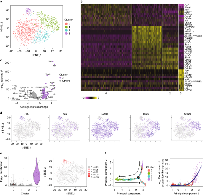Single-cell RNA-seq reveals TOX as a key regulator of CD8+ T cell persistence in chronic infection
