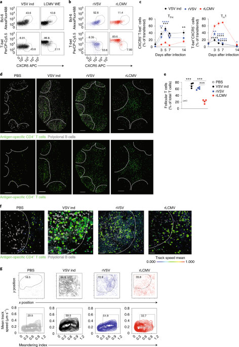 Spatiotemporal regulation of type I interferon expression determines the antiviral polarization of CD4+ T cells