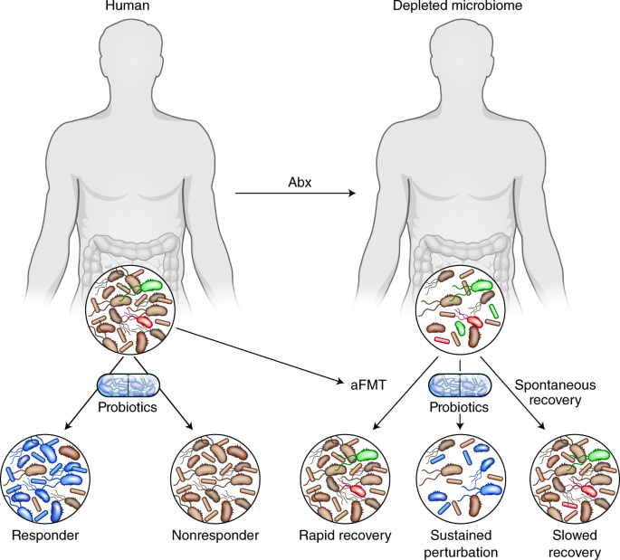 Rules of engagement in the gut microbiome