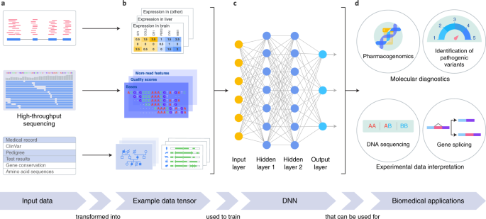 A guide to deep learning in healthcare | Nature Medicine