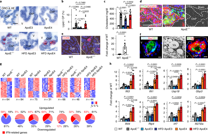 ApoE attenuates unresolvable inflammation by complex
