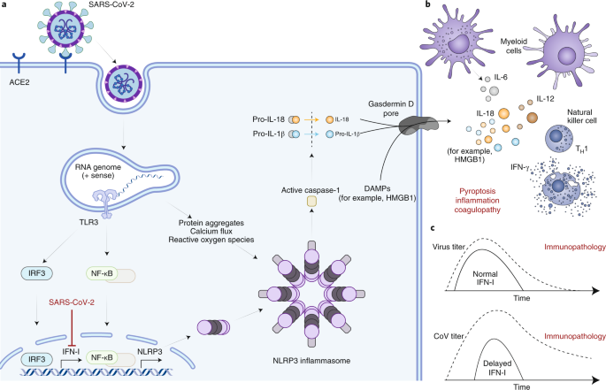 Immune determinants of COVID-19 disease presentation and severity
