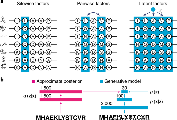 Deep generative models of genetic variation capture the effects of mutations