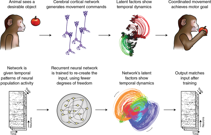 Deep learning reaches the motor system | Nature Methods