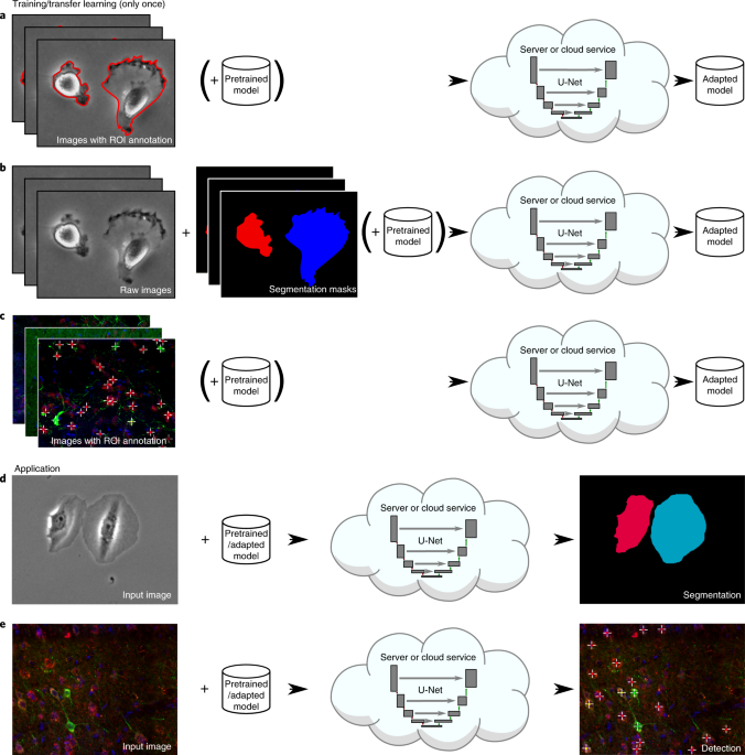 U-Net: deep learning for cell counting, detection, and