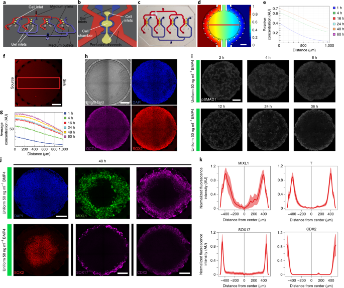 Engineered signaling centers for the spatially controlled