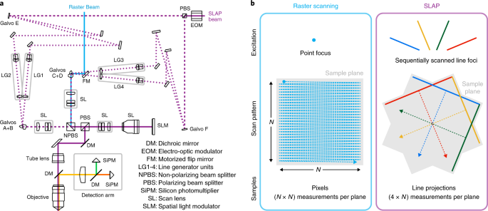 Kilohertz frame-rate two-photon tomography | Nature Methods