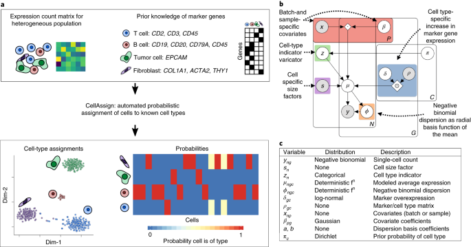 Probabilistic cell-type assignment of single-cell RNA-seq
