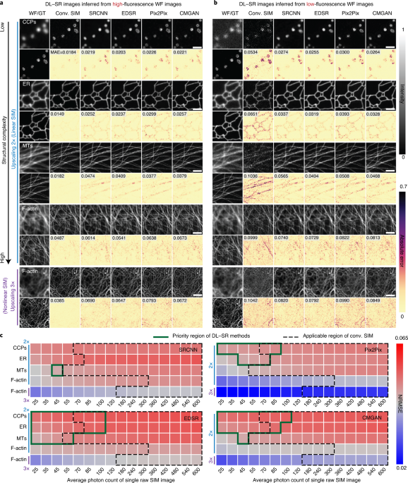 Evaluation and development of deep neural networks for image super-resolution in optical microscopy