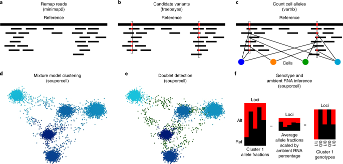 Souporcell: robust clustering of single-cell RNA-seq data by genotype without reference genotypes