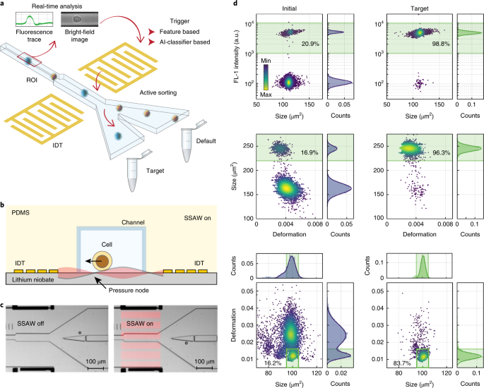 Intelligent image-based deformation-assisted cell sorting with molecular specificity