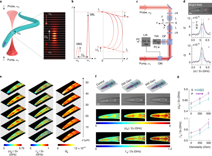 High-sensitivity and high-specificity biomechanical imaging by stimulated Brillouin scattering microscopy