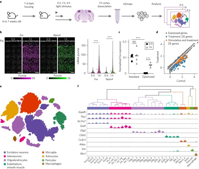 Single Cell Analysis Of Experience Dependent Transcriptomic States