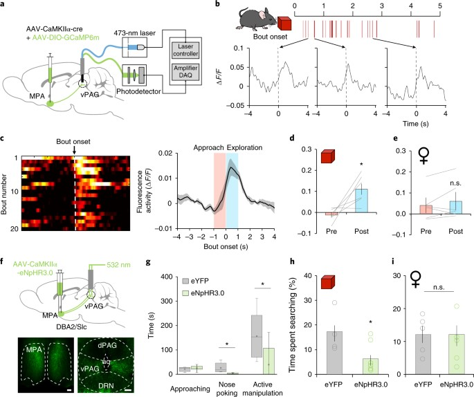 Medial preoptic circuit induces hunting-like actions to target ... on