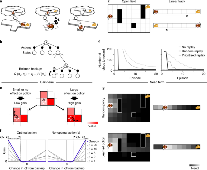 prioritized memory access explains planning and hippocampal replay