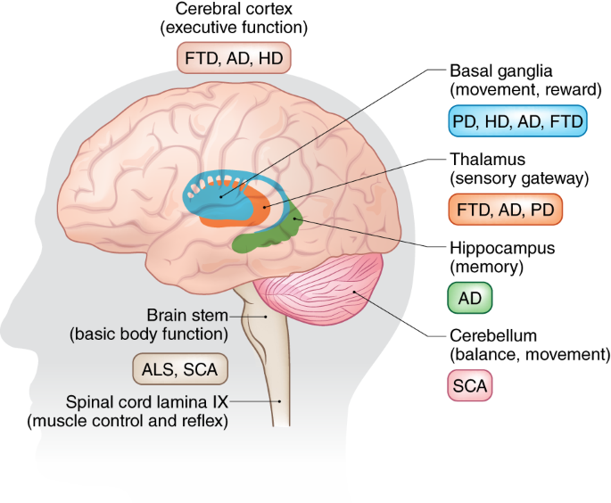 Converging pathways in neurodegeneration, from genetics to mechanisms