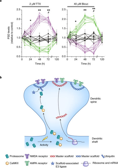 Deconstructing The Synapse Nature Neuroscience