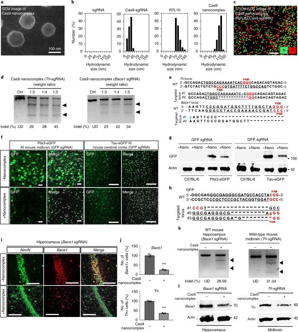 In vivo neuronal gene editing via CRISPR–Cas9 amphiphilic nanocomplexes alleviates deficits in mouse models of Alzheimer's disease