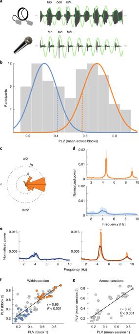 Spontaneous synchronization to speech reveals neural