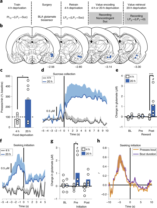 Distinct cortical–amygdala projections drive reward value encoding and retrieval