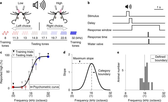 Causal contributions of parietal cortex to perceptual