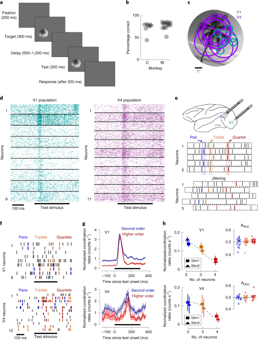 High-order coordination of cortical spiking activity modulates