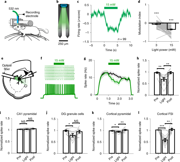 Thermal constraints on in vivo optogenetic manipulations | Nature