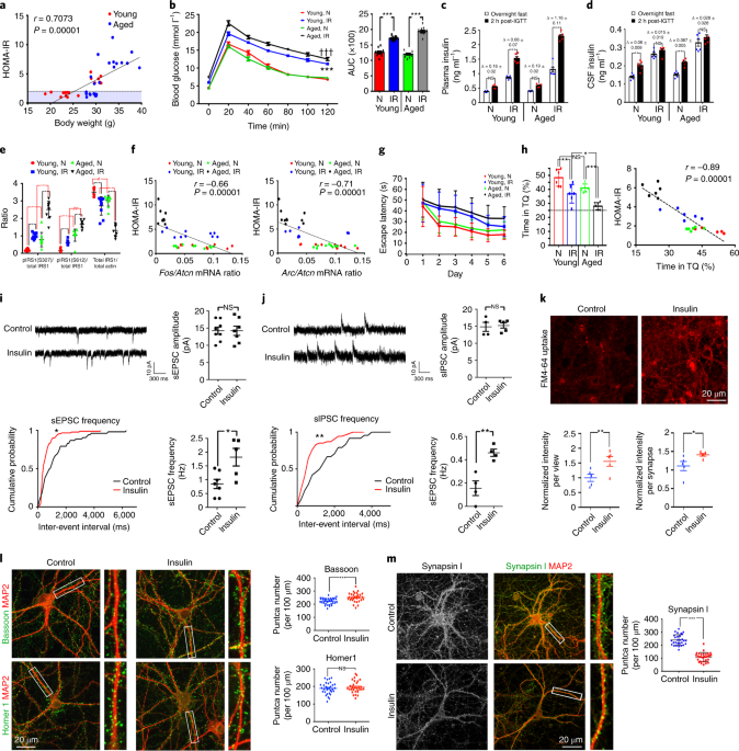 Age-related hyperinsulinemia leads to insulin resistance in neurons an
