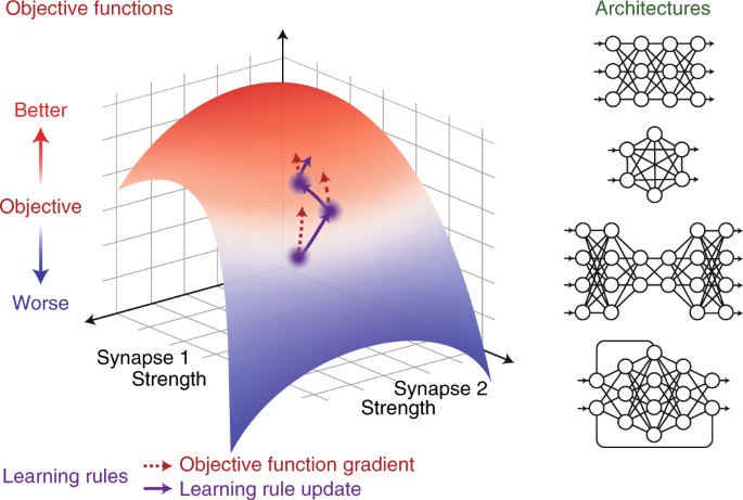 A Deep Learning Framework For Neuroscience Nature Neuroscience