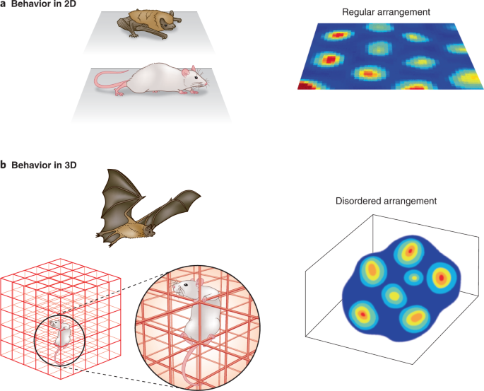 Grid cells produce exceptionally regular firing patterns as animals navigate in 2D spaces. Two new studies show that in flying and climbing animals, t