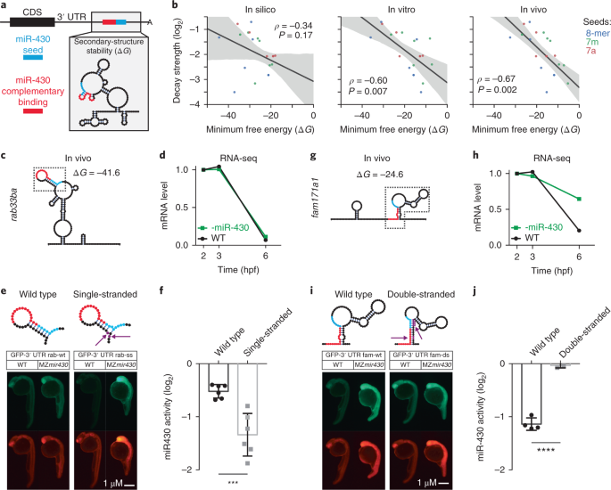 Analyses of mRNA structure dynamics identify embryonic gene