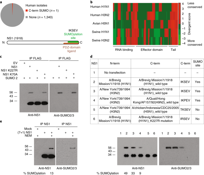 Influenza Virus Infection Causes Global Rnapii Termination Defects