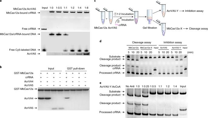 0c542ec189 Flipboard  Crispr Gene Editing Could One Day Cut Away Human Pain
