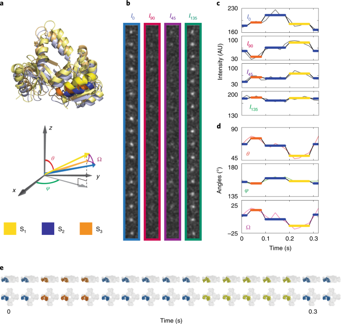 Integrating spatiotemporal features of a ligand-regulated