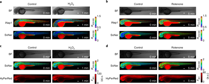 Analysis of redox landscapes and dynamics in living cells