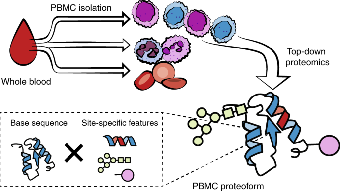 A comprehensive pipeline for translational top-down
