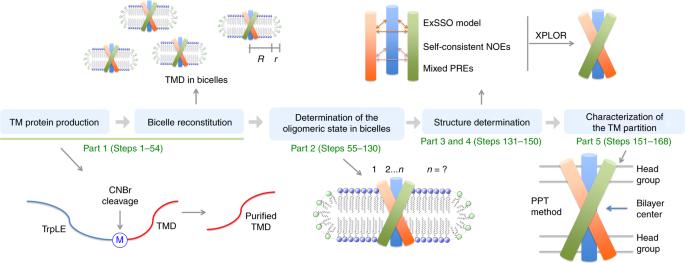 Structure determination protocol for transmembrane domain